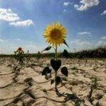 Képviselőház: kártérítést kapnak azok a gazdák, akik kárt szenvedtek a kedvezőtlen időjárási jelenségek miatt